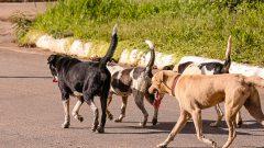 Cachorros de rua. Foto: Cecília Bastos/USP Imagem