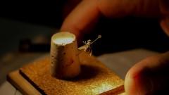 Moscas coletadas para experimento de entomologia forense pela bióloga Maria Luiza Cavallari da Faculdade de Medicina. foto Cecília Bastos/Usp Imagens