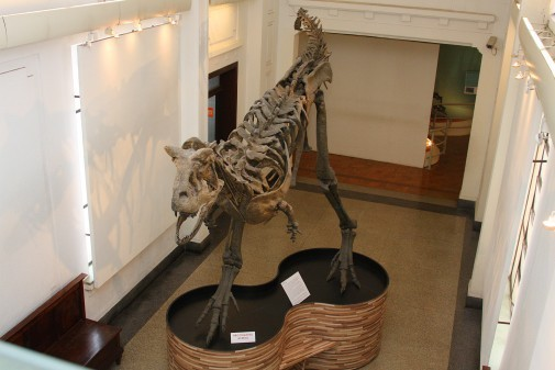 Museu de Zoologia III