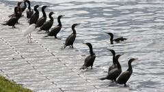 Pássaros na raia da USP. foto Cecília Bastos/Usp Imagens