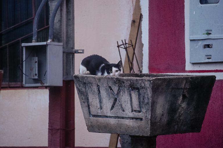 gatos de rua. Foto: Cecília Bastos/USP Imagem