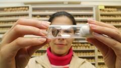 Laboratório de Biologia de Insetos da ESALQ