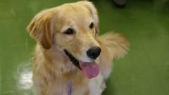 Projeto Pet Smile de Zooterapia no HU